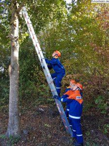 Mit Hilfe von Leitern mussten Katzen aus Bäumen gerettet werden