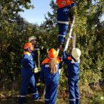 Mit Hilfe von Leitern müssen Katzen aus Bäumen gerettet werden