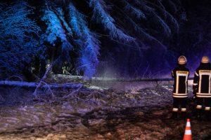 Bäume sind auf die B2 gestürzt. Einer verursachte den Verkehrsunfall. (Bild: Ralph Goppelt)